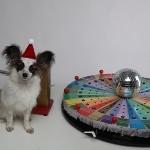 Шоу с животными - Собака на Поле Чудес