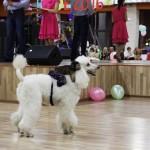 Шоу с животными - TryukShou